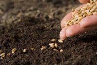 Тернопільщина на 110% забезпечена кондинційним насінням ярих