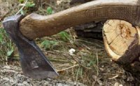 У лісі Лановецького району вирубали дерева на суму 1 мільйон 300 тис. грн.